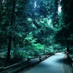 Dark pine road